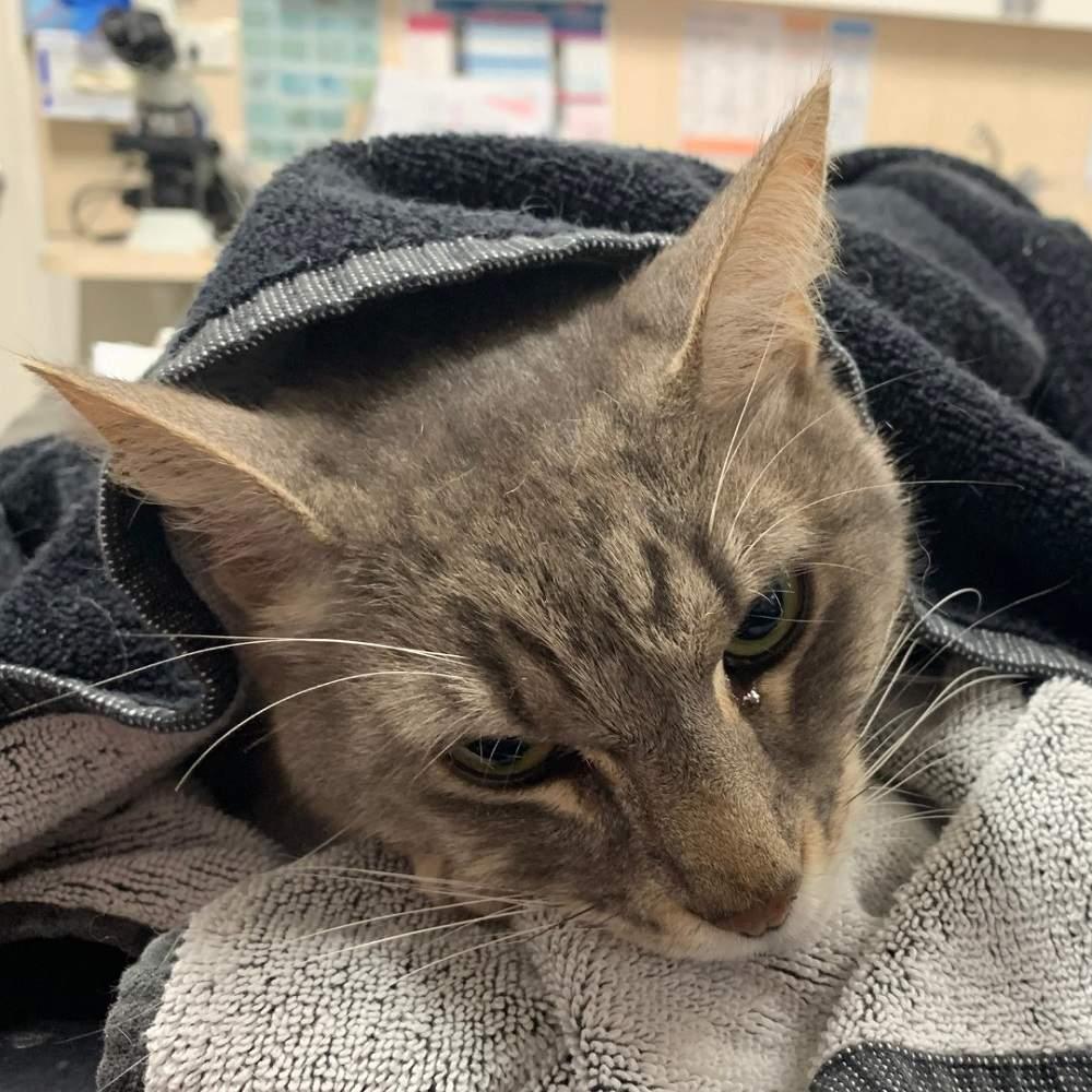 Кот спас детей ценой собственной жизни