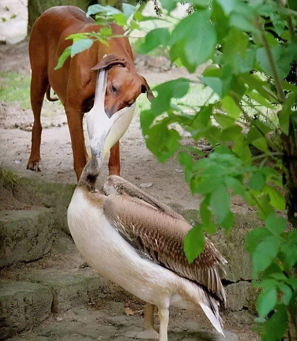 Странные фотографии животных