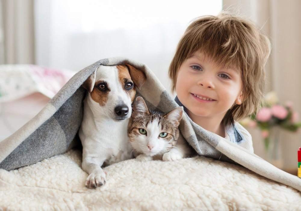 Спреї від бліх не рекомендують для маленьких тварин