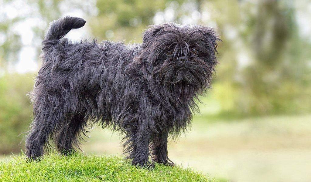 Собаки цієї породи з радістю проводять час з хазяїном / Фото Lapkins