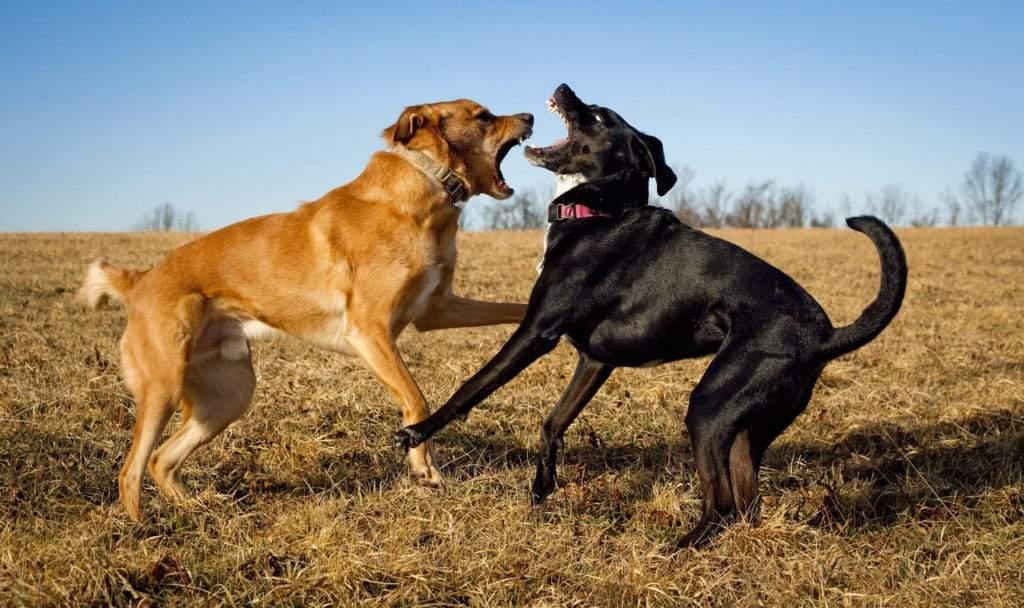 Собакам подобається, коли за ними спостерігає власник