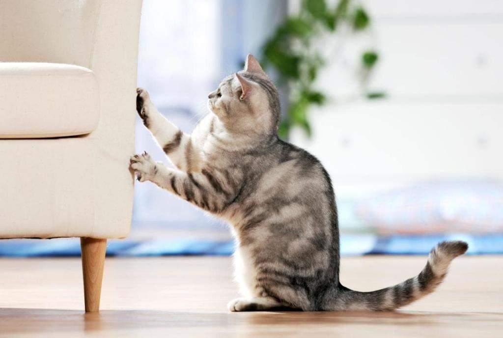 Коты не понимают, за что их наказывают