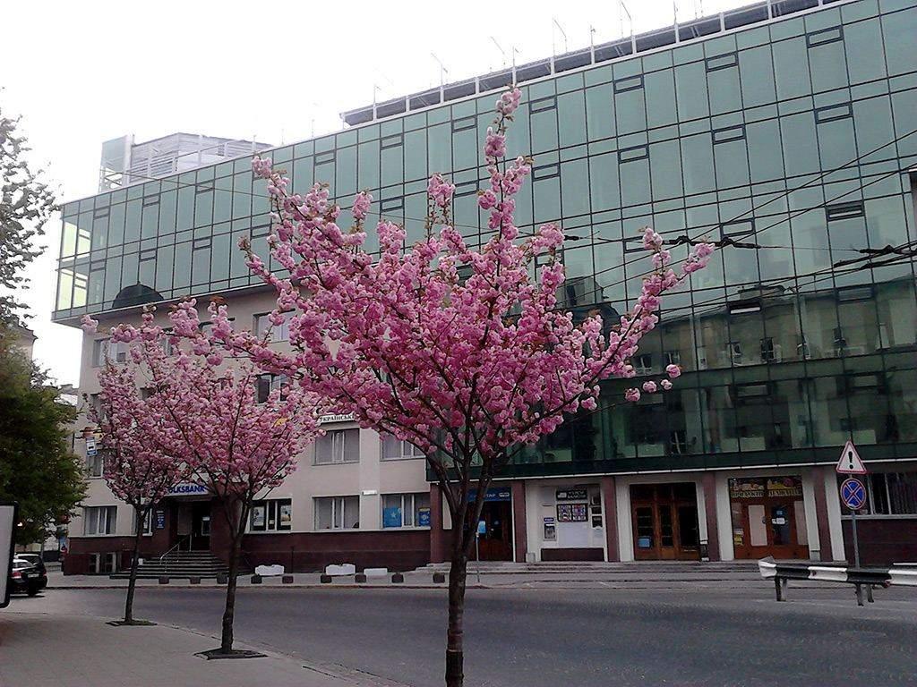 Де у Львові квітнуть сакури: 10 локацій для весняних фотосесій