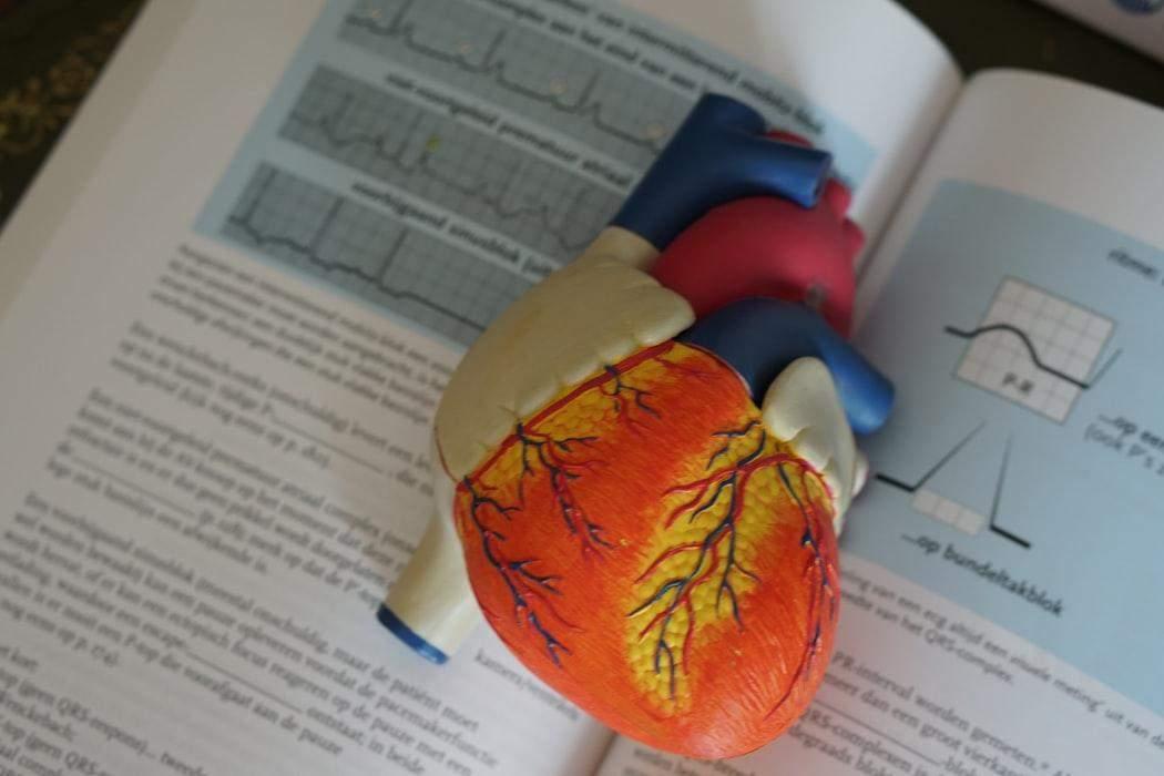 Яка частота скорочень серця є нормою