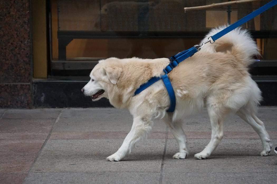 Вміння розмовляти з собакою допоможе на вулиці