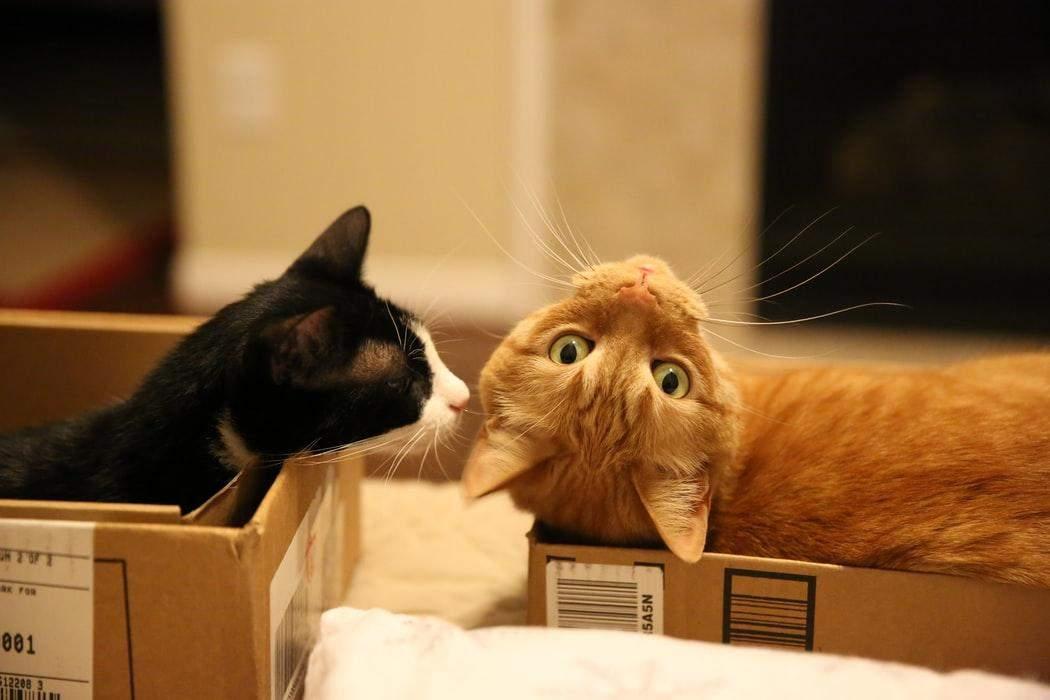 Котам подобається текстура коробок