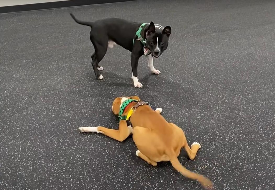 Карло стал другом и учителем для спасенного щенка