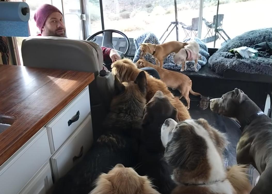 Хозяин берет своих собак в путешествие