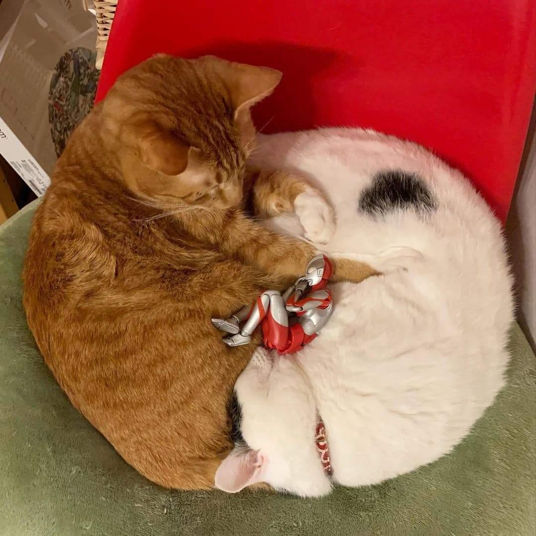 Коты и Ультрамен