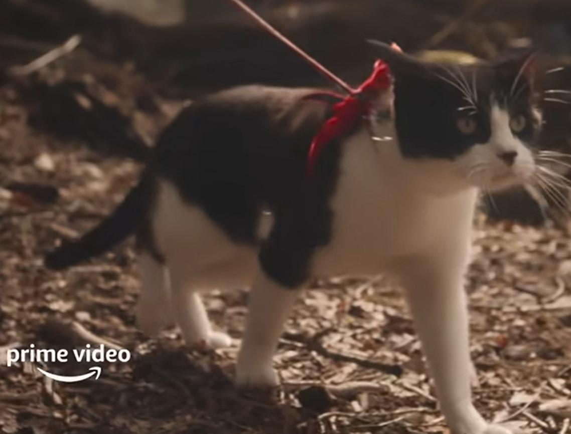 Кіт у фільмі