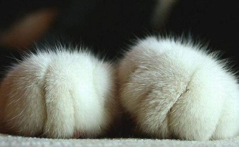 Чимало людей полюбляють цей своєрідний масаж від котиків