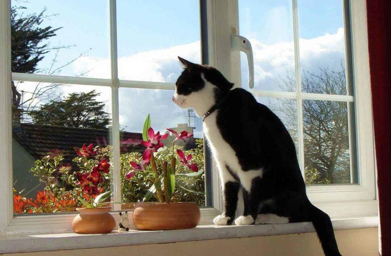 Сделайте коту место для сидения на окне