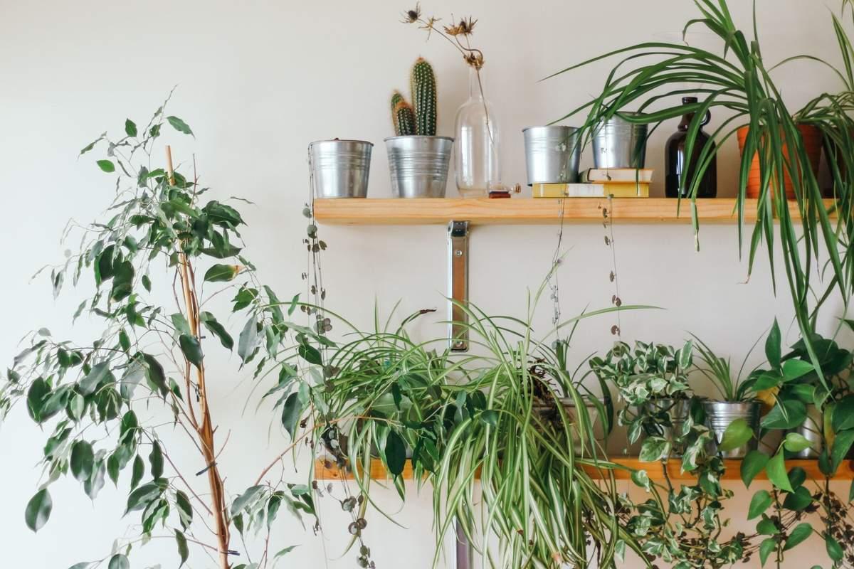 Аллергия на растения – симптомы, лекарства при рините