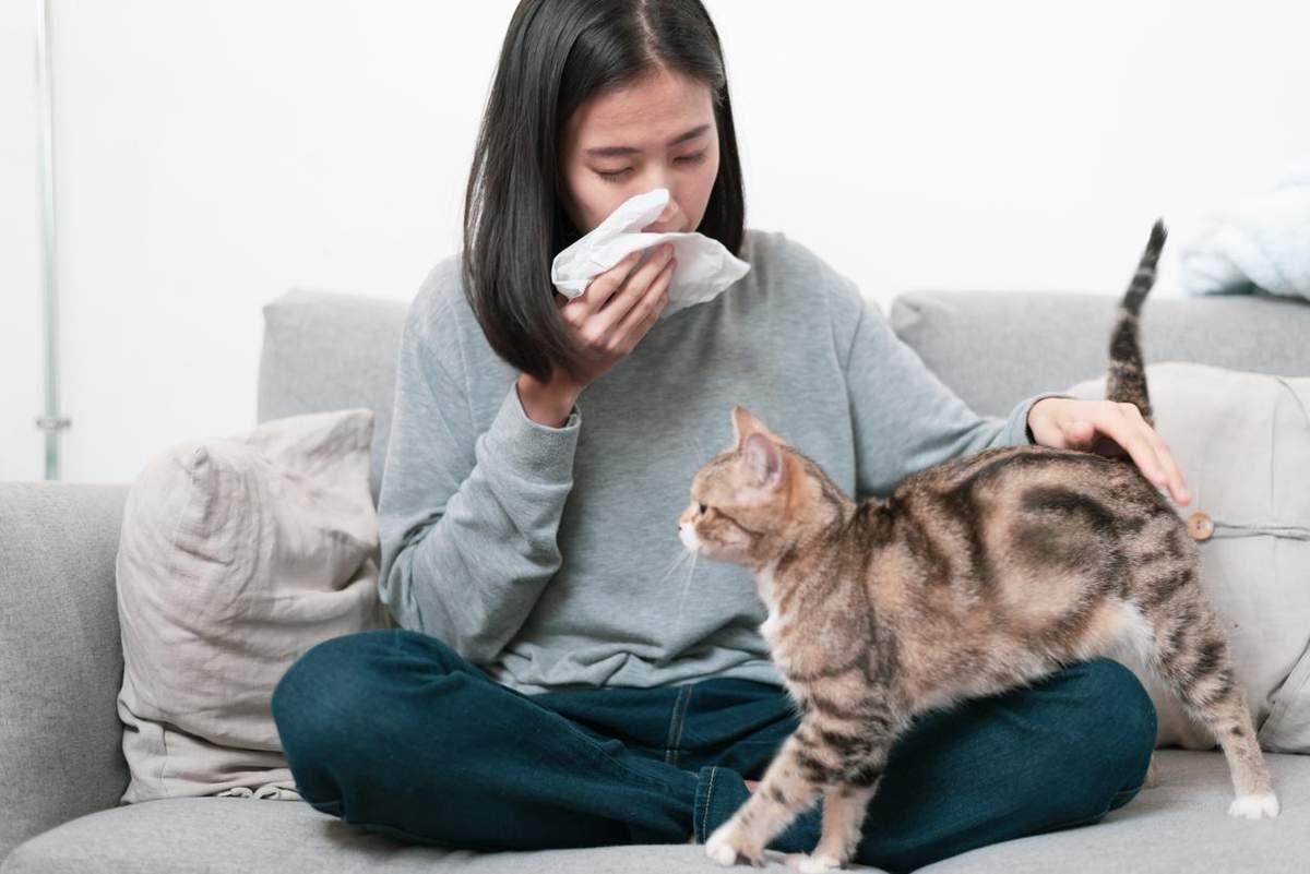 Алергія на домашніх тварин – причини, симптоми – що робити