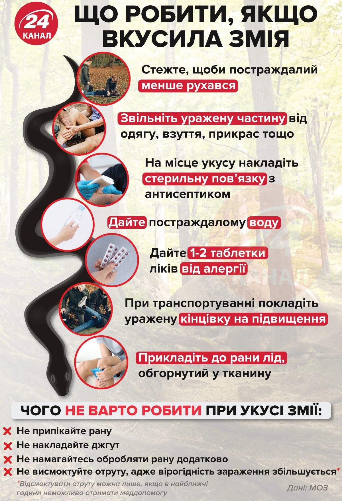 Що робити, якщо вкусила змія / Джерело: МОЗ / Інфографіка 24 каналу