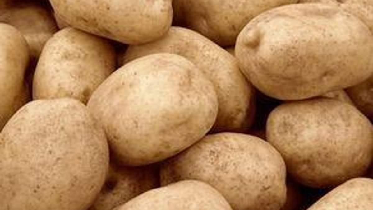 Вчені розшифрували ДНК картоплі і готуються вивести її нові якісні сорти