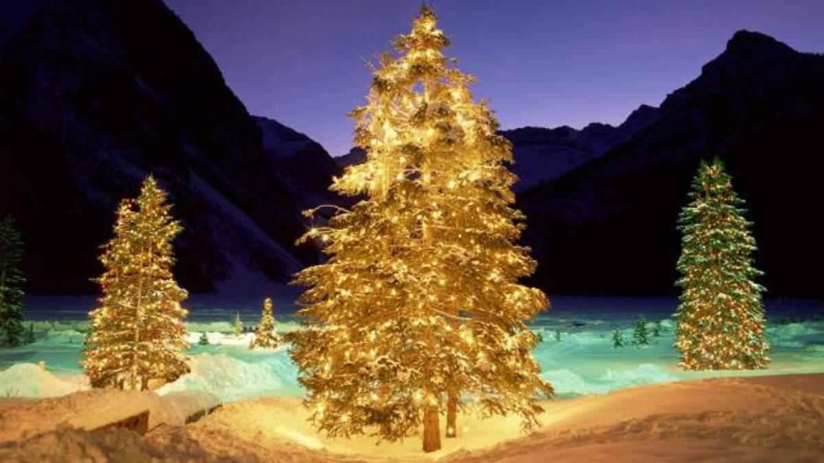 В Токио можно приобрести новогоднюю елку из золота
