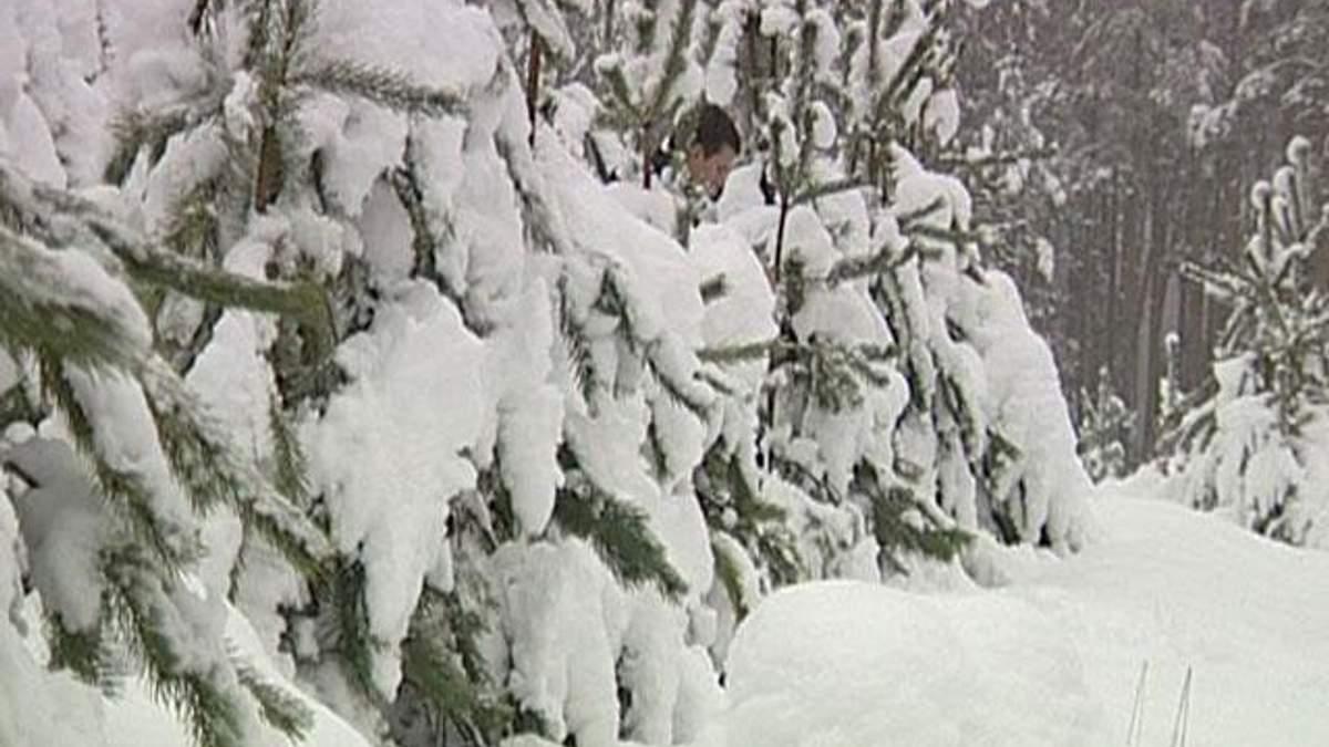 До різдвяного продажу підготували понад мільйон ялинок