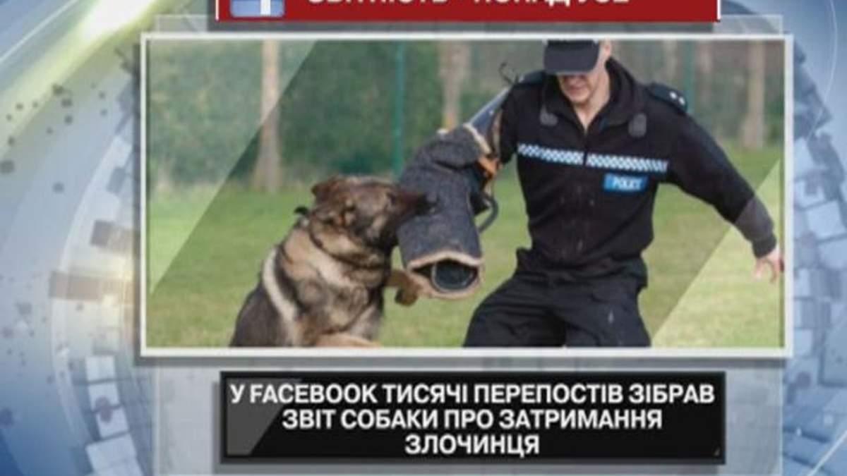 В Facebook отчет собаки о задержании преступника собрал тысячи перепостов