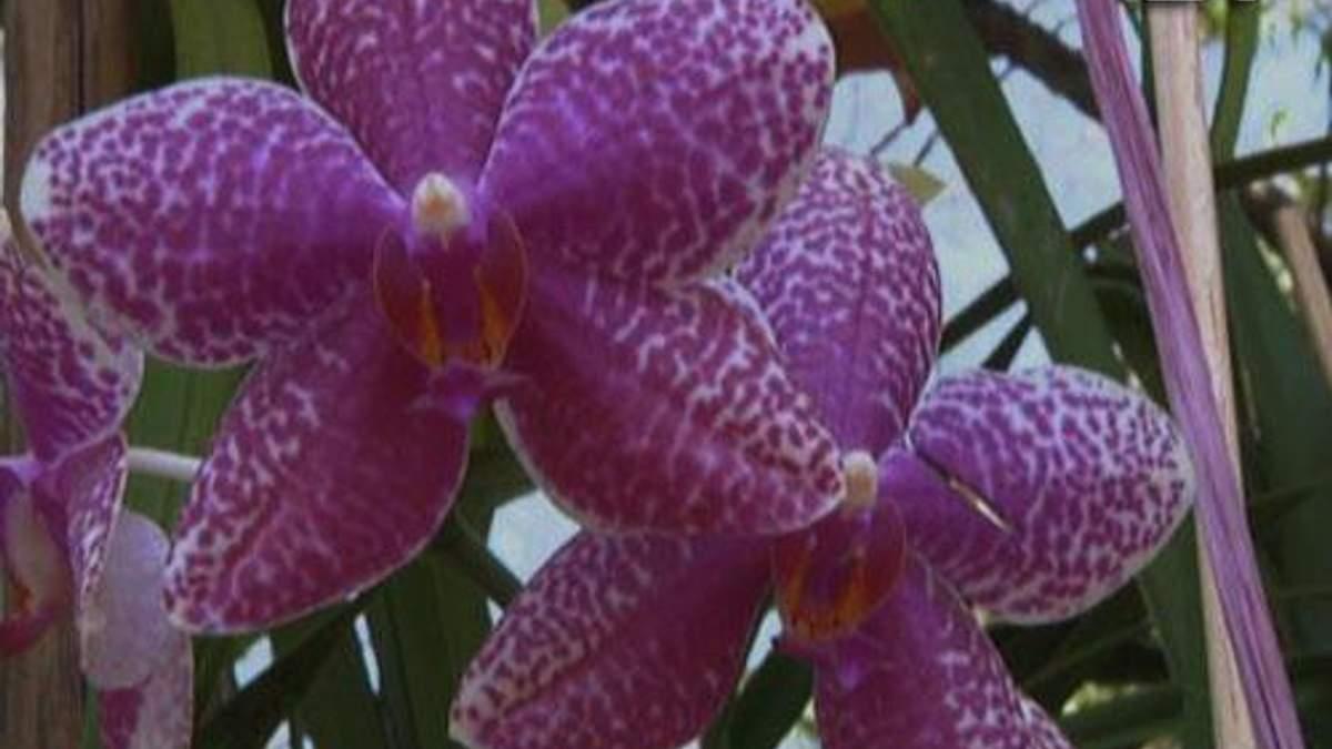 Веракрус та Кайманові острови – землі орхідей, ванілі та блакитних ігуан