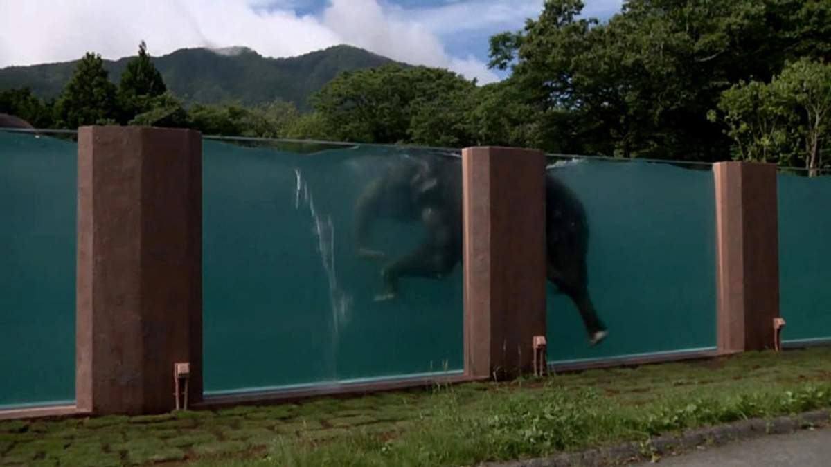 У Японії слонам збудували величезний басейн