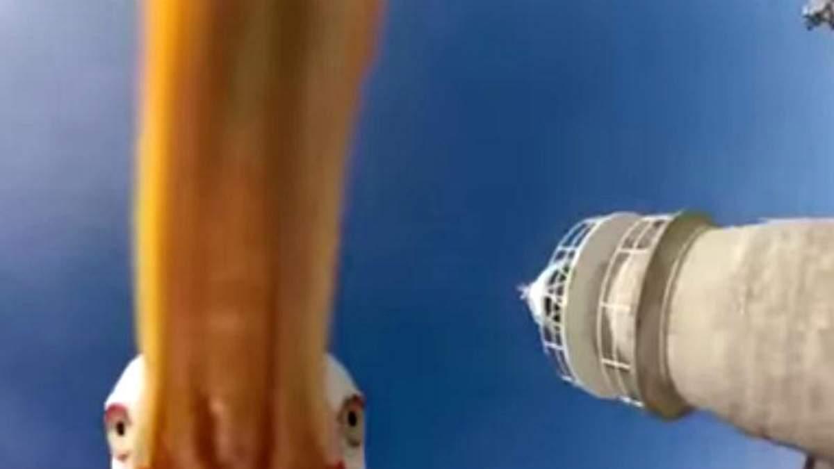 Чайка вихопила в туриста камеру і зробила унікальне відео