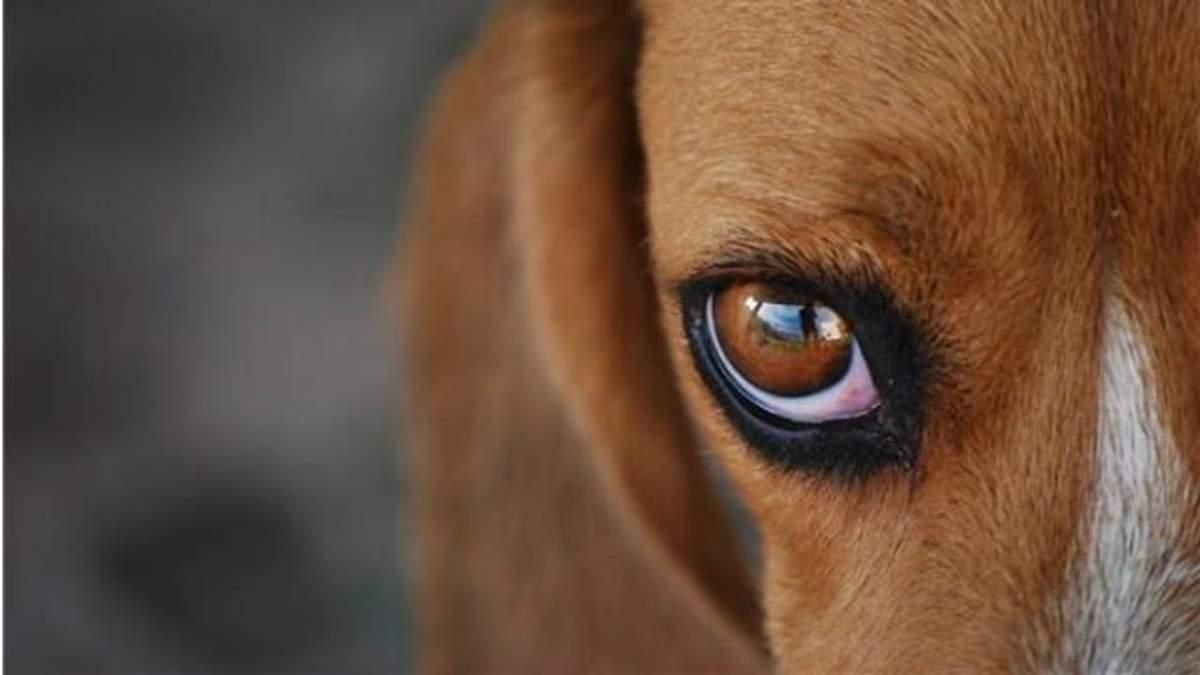 Растроганная собака заплакала, когда увидела своих щенков