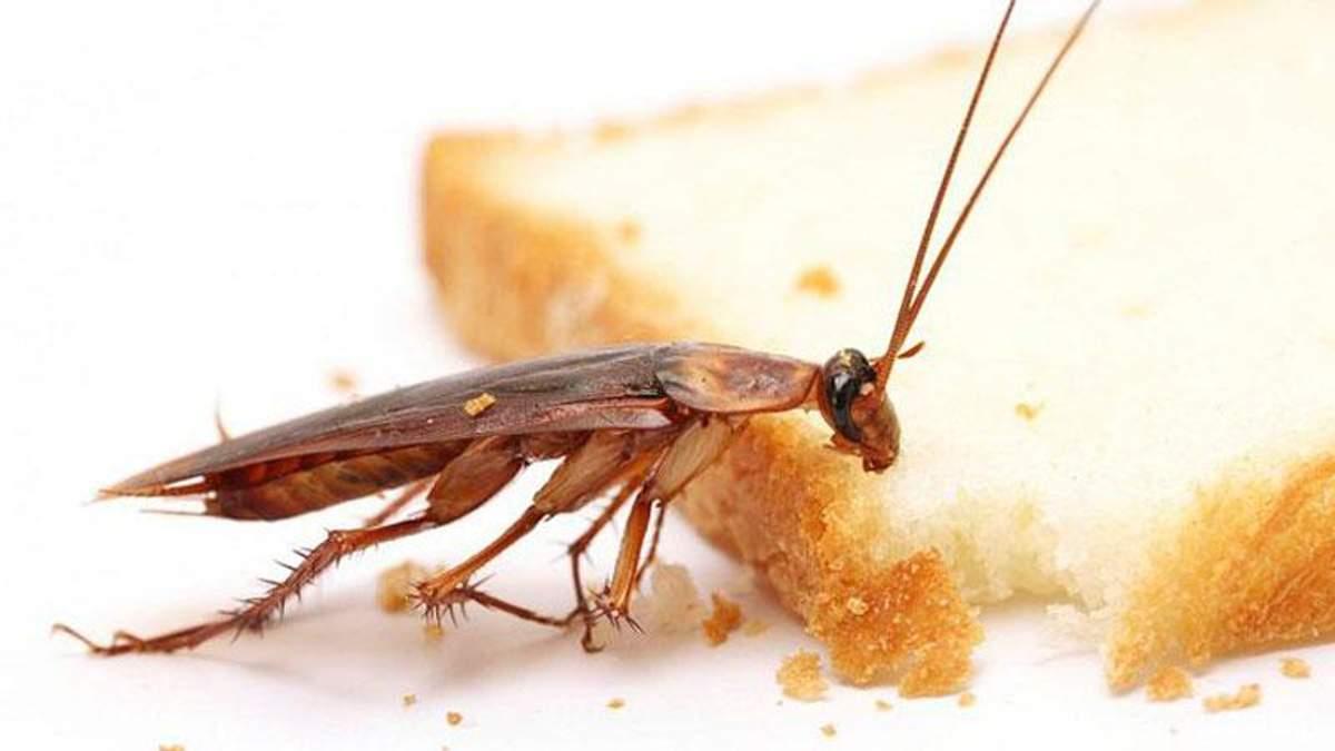 Тараканы завелись в КГГА