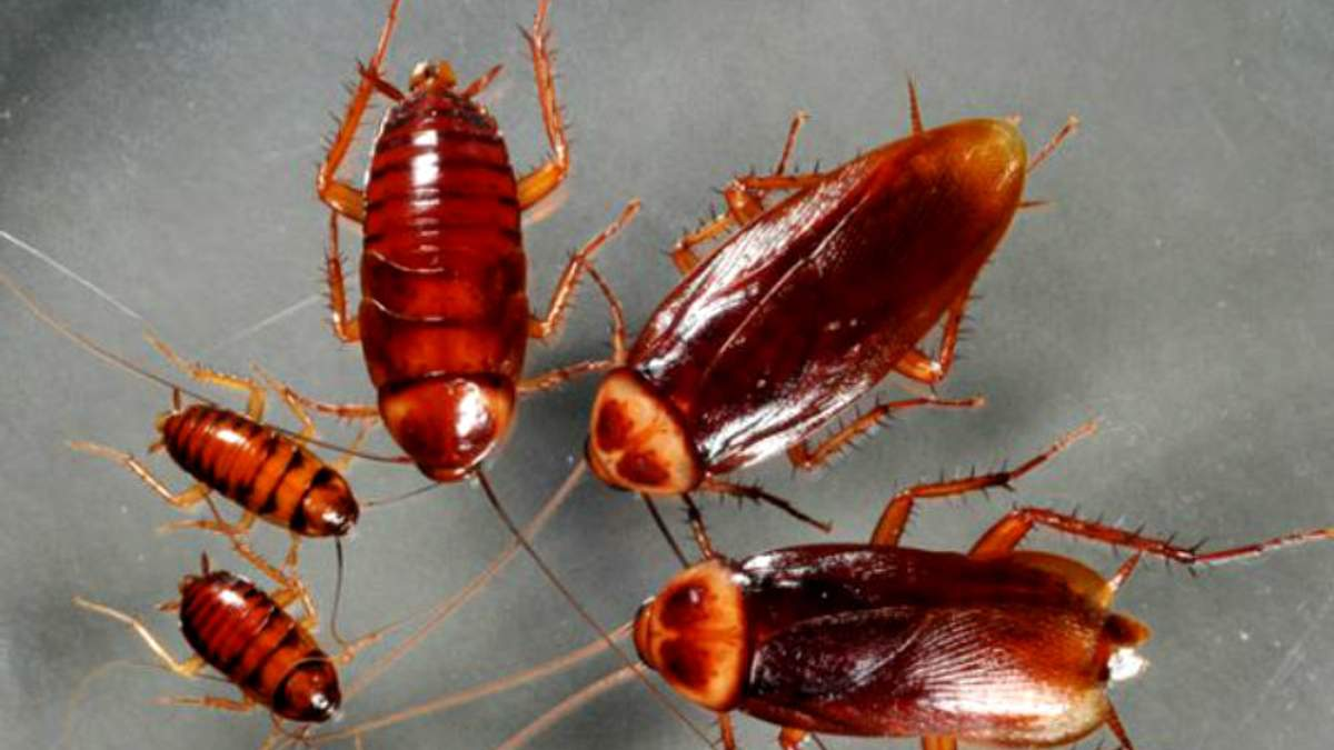 У мужчины в ухе жило семейство тараканов