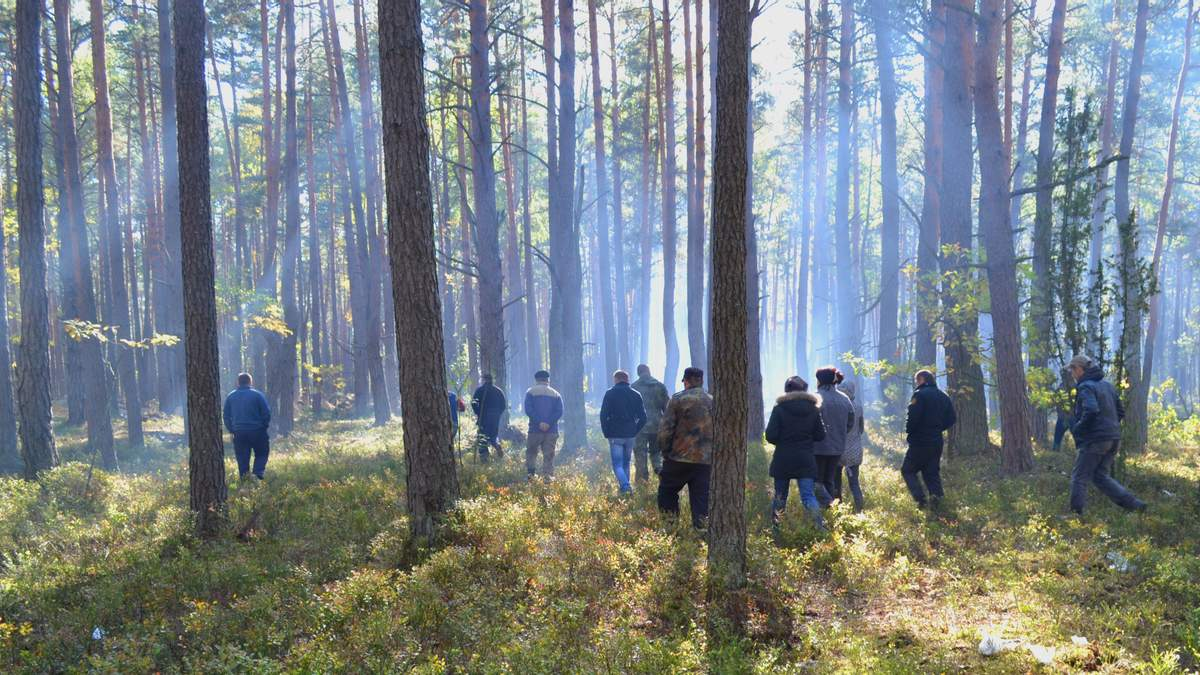 Маневицкие леса