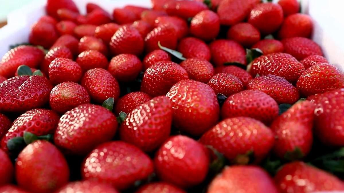 Альтернатива супермаркетам та ринкам: ізраїльтяни продають полуницю прямо з поля