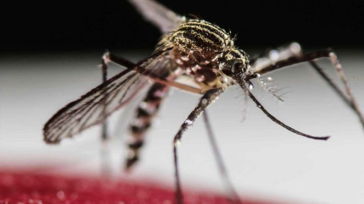 У Китаї вилікували чоловіка, який заразився вірусом Зіка