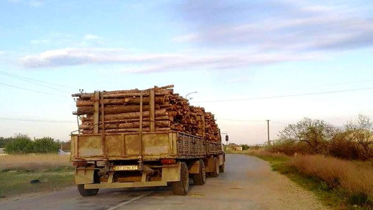 Из-за вырубки лесов в Херсоне начались пыльные бури
