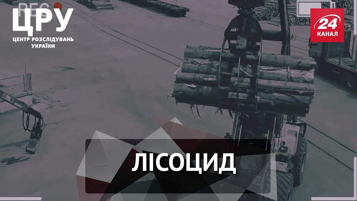 Стало відомо про нову шокуючу схему українських контрабандистів лісу