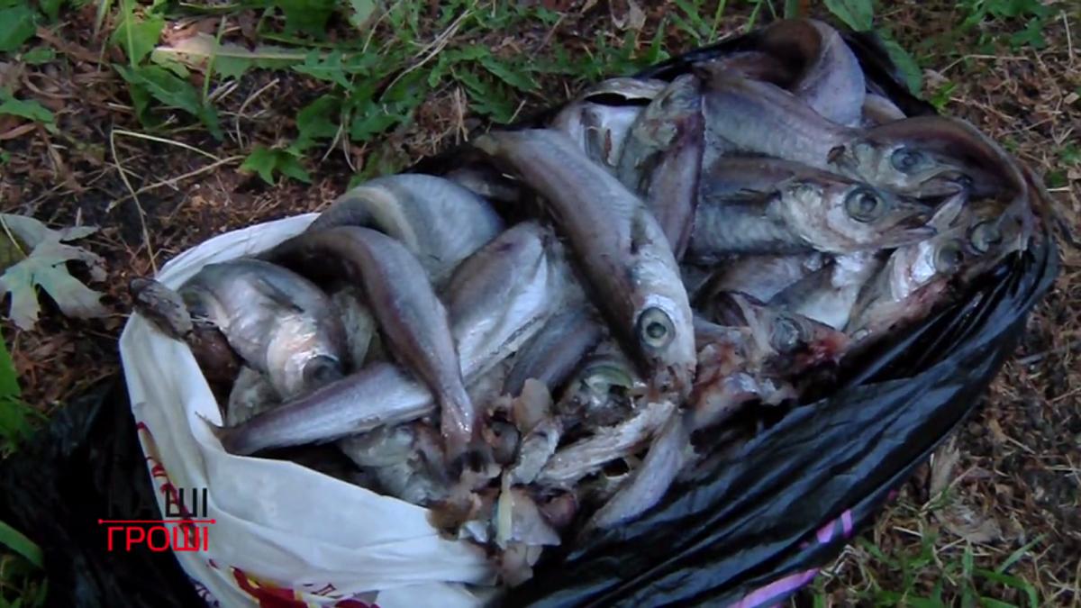 Всі дороги ведуть до Януковича: хто насправді годує в'язнів хворою рибою