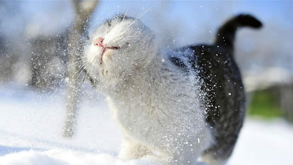На Одещинні выпал первый снег: появилось фото