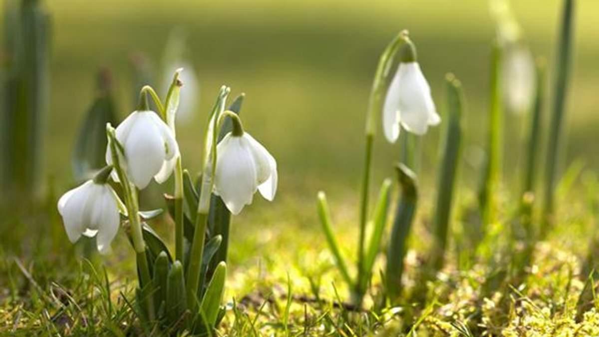 Шесть дополнительных выходных будут иметь украинцы весной