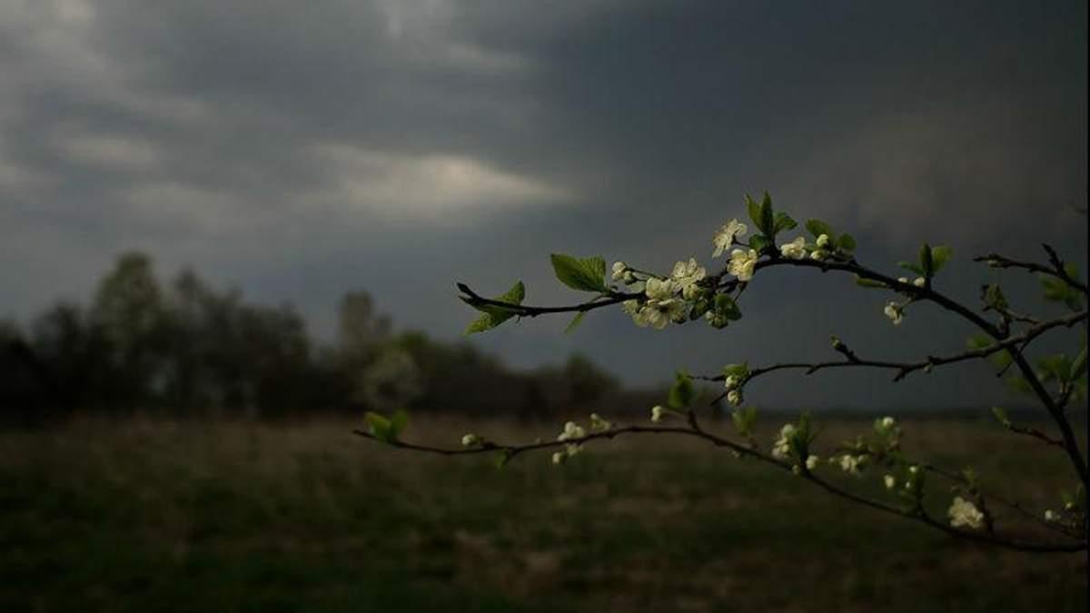 Прогноз погоды на 8 мая в Киеве и городах Украины