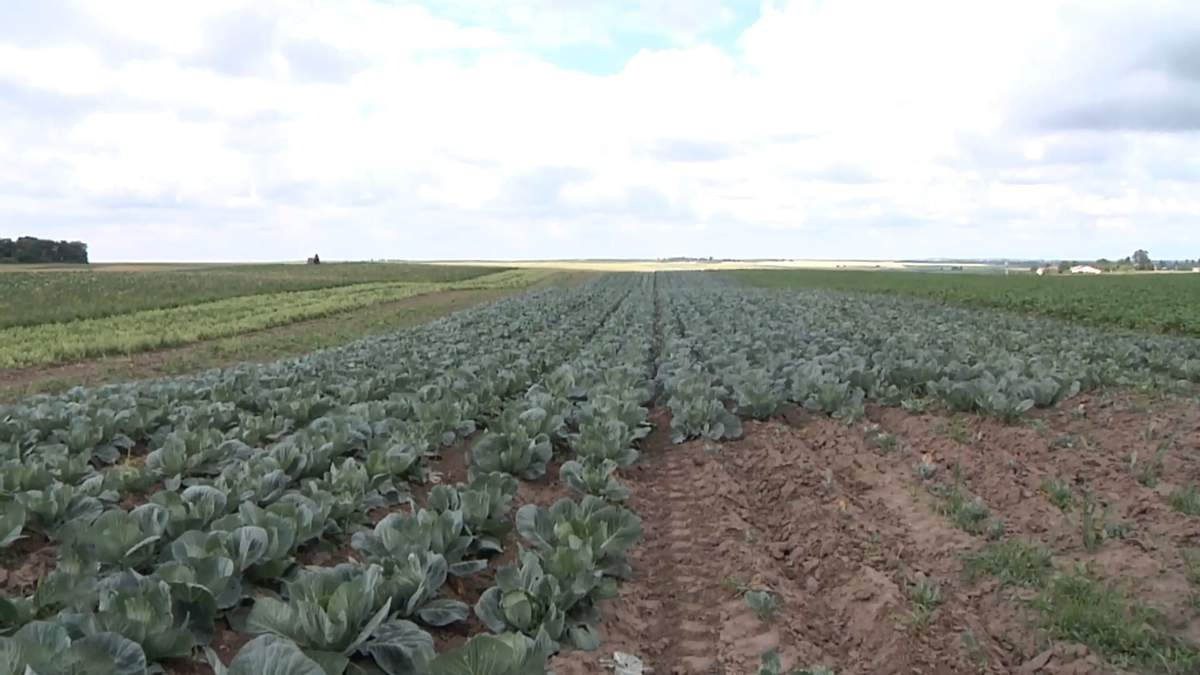 Готовы ли украинские фермеры конкурировать с агрохолдингами на рынке земли