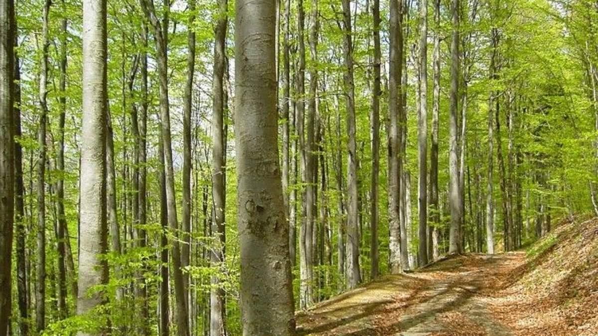 Новим ділянкам Букових пралісів Карпат надано статус Всесвітньої спадщини ЮНЕСКО