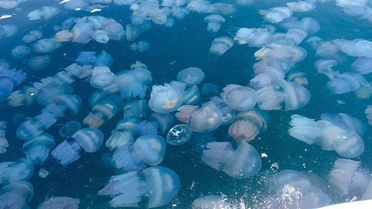 Нашестя медуз в окупованому Криму
