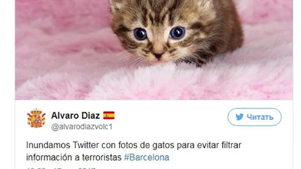 Після теракту в Барселоні користувачі Twitter почали масово постити котів