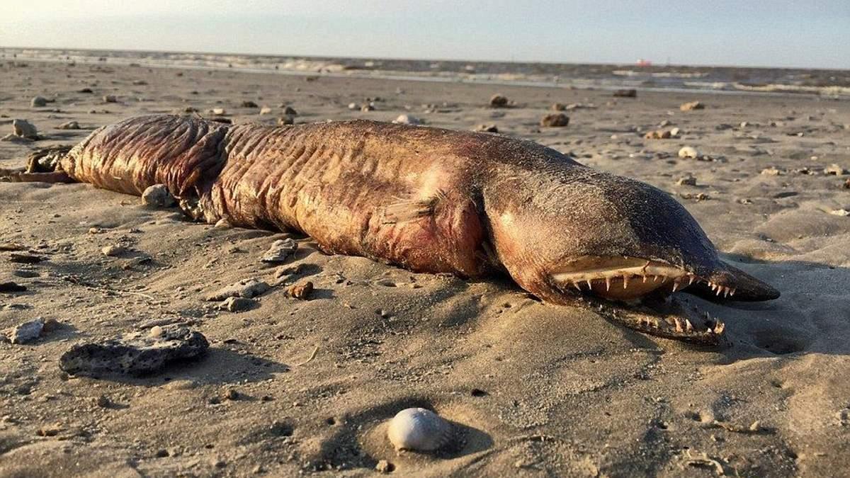На берег США викинуло невідому страхітливу істоту: з'явились фото