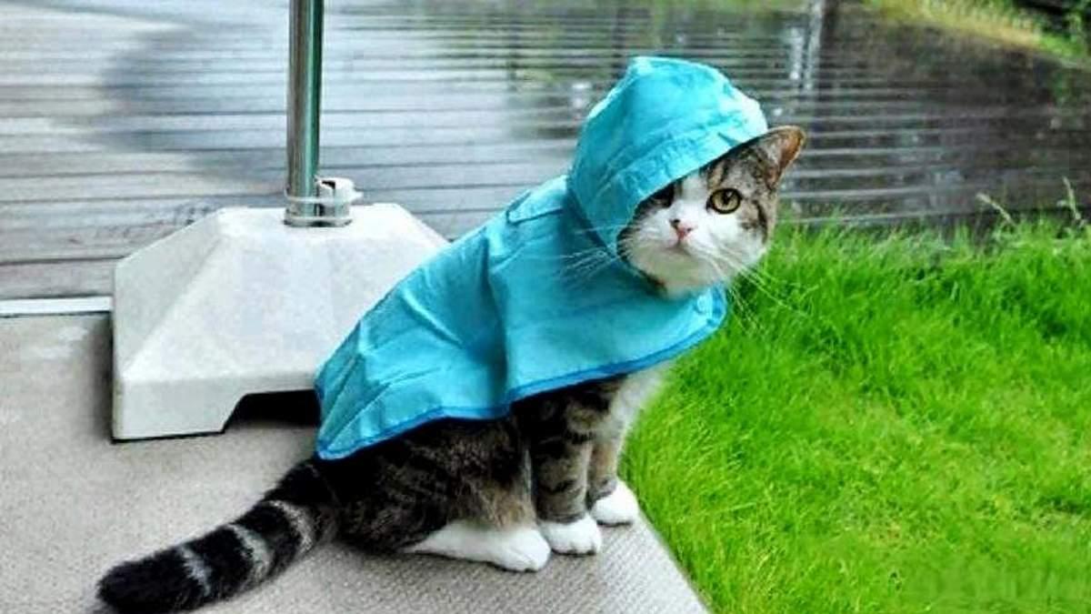 Погода на 5 жовтня в Україні від синоптиків - прогноз