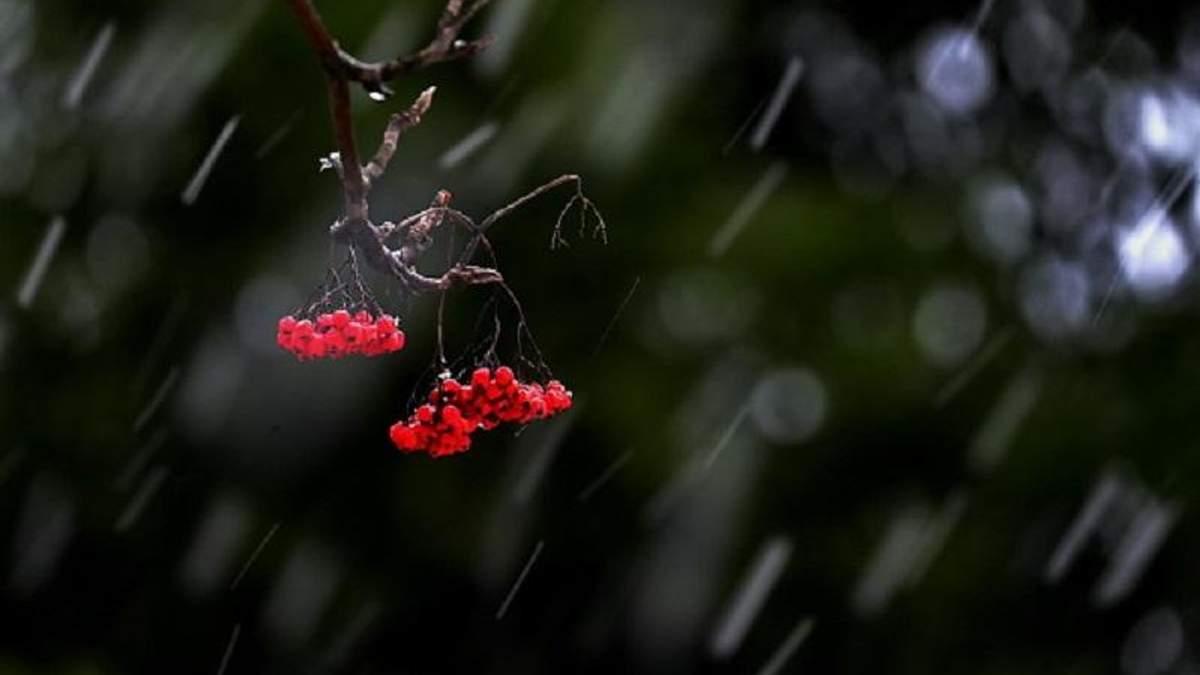 Погода 25 ноября в Украине: туманы и морозы
