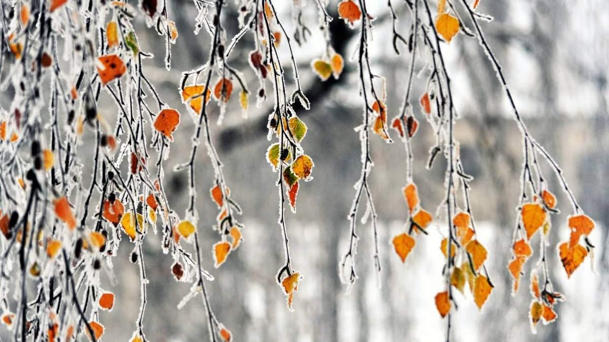 Погода в Украине 2 декабря будут влажной, с дождями и мокрым снегом
