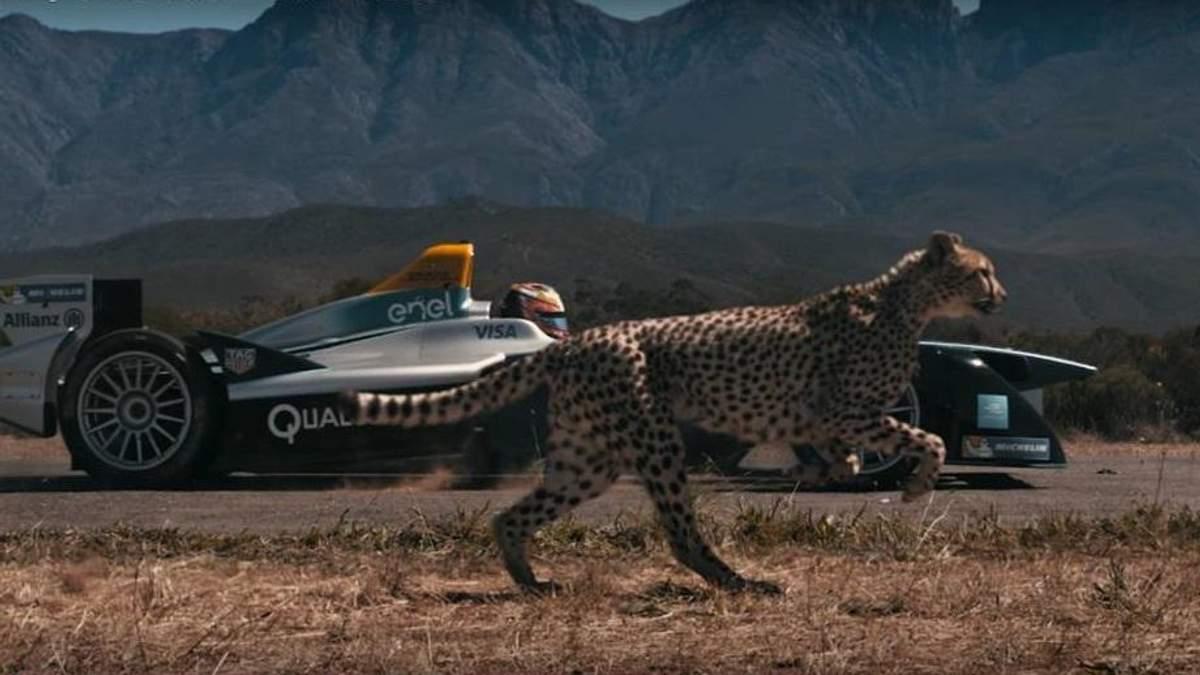 Болид Формулы-Е против гепарда