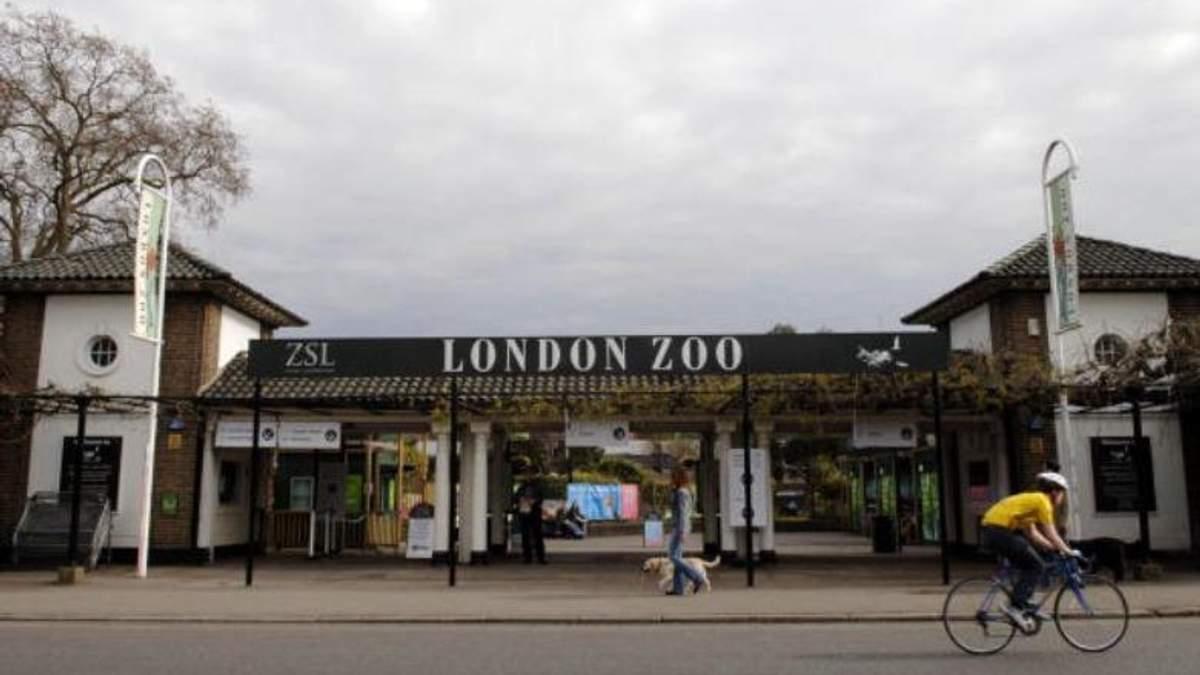У зоопарку Лондона сталась пожежа