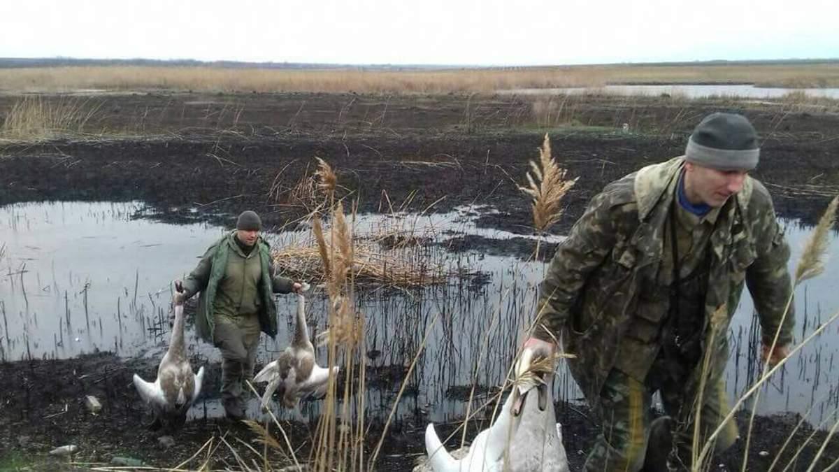 Двое чиновников расстреляли лебедей на Киевщине