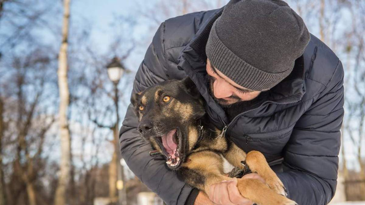 Зворушлива історія дружби десантника та собаки в зоні АТО